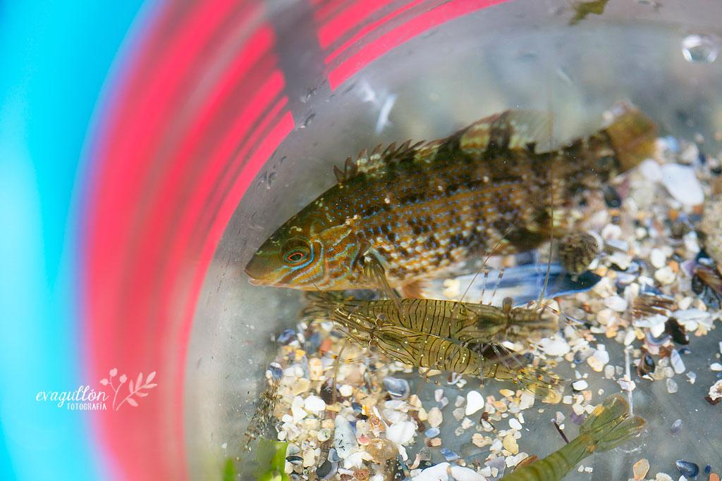 peixinhos2